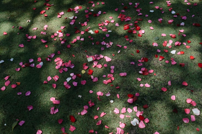 wedding-flower-petals-coolangatta-estate